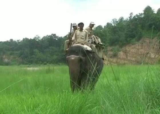कार्बेट प्रशासन ने बाघ और हाथी की सुरक्षा के मद्देनजर हाई अलर्ट किया जारी